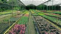 rows of plants in plant shop
